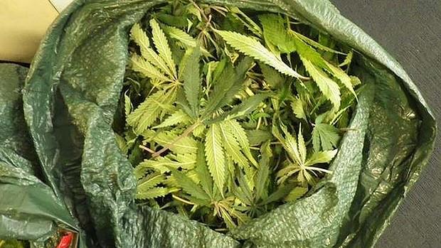 Premieră mondială: Statul Uruguay va vinde legal cannabis