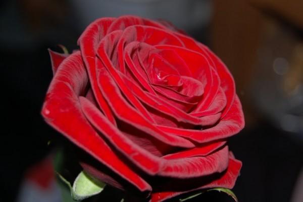 Care este simbolistica florilor primite în dar?