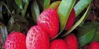 Ce ştim despre fructele exotice?