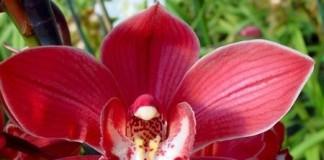 Floarea sufletului nostru