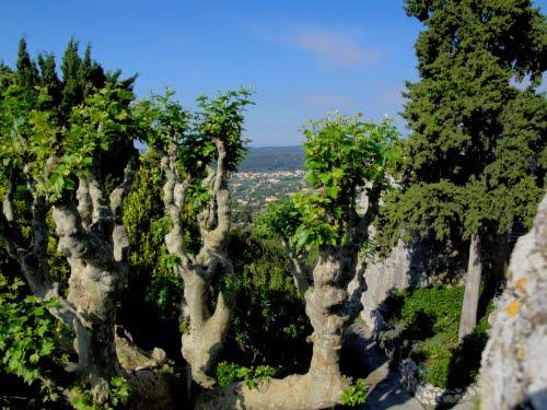 Copacii sfinţi ai zodiacului