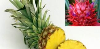 Ananasul şi bromelaina