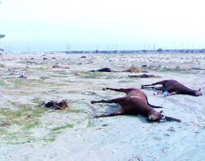 Sute de cai uciși, decoperiți în apropiere de lacul Brateș
