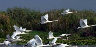 Senatul a menținut sancționarea activităților de vânătoare în rezervația Delta Dunării