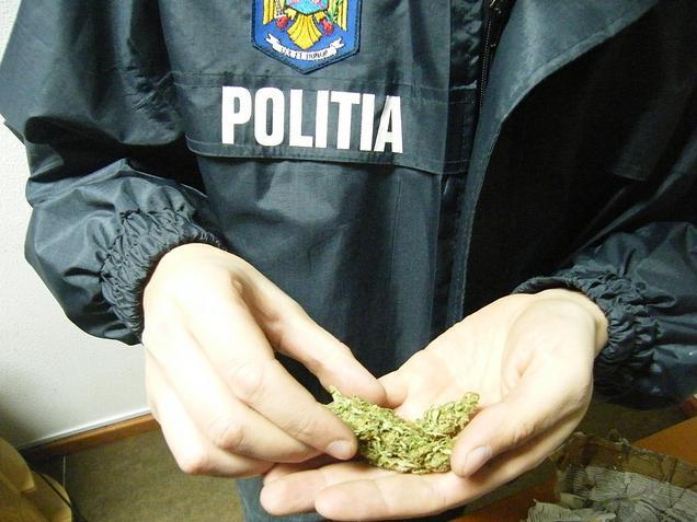 Bucureşti: Au fost descoperite șapte laboratoare de producere a cannabis-ului
