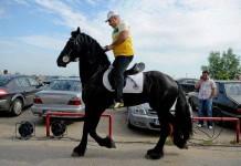 Garda de Mediu îi va confisca animalele lui Nuțu Cămătaru