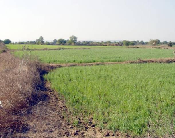 Guvernul vrea impozit pentru pământul nelucrat