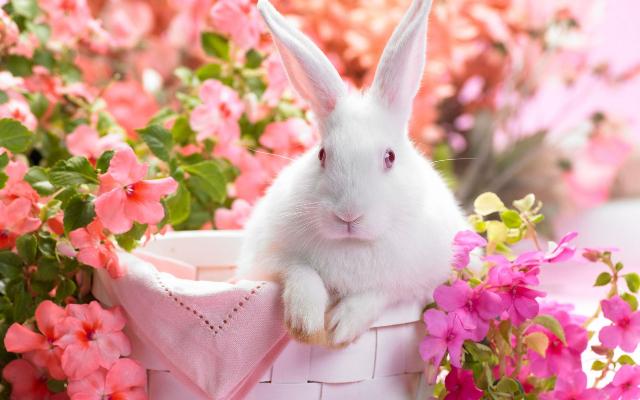 Să invităm primăvara în casă!