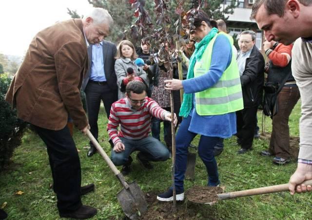 Oprescu plantare copac