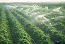 ANM: În sud-estul României va fi secetă în iulie şi august