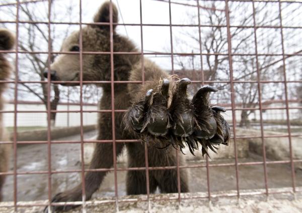 Animelele sălbatice confiscate de la Nuțu Cămătaru nu pot fi transferate în Africa de Sud