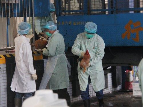 Caz de gripă aviară H7N9, confirmat în Taiwan