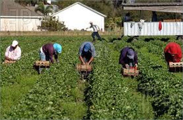 Imigranți împușcați pe o plantație de căpșuni din Grecia