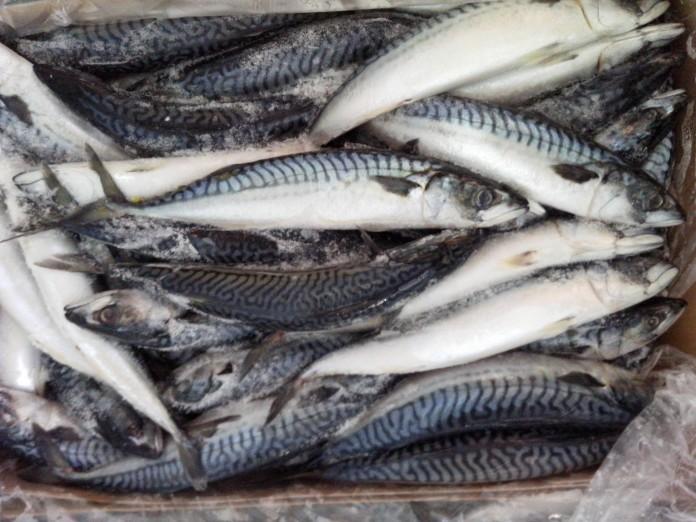 Galați: Persoanele cu venituri reduse primesc peşte de Florii