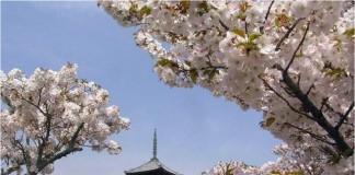 Primavara in Japonia