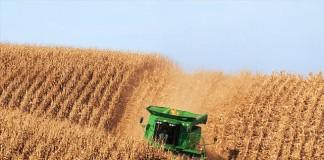 Măsura evaziunii în agricultură: Nimeni nu poate suporta mai mult de un an de pierderi