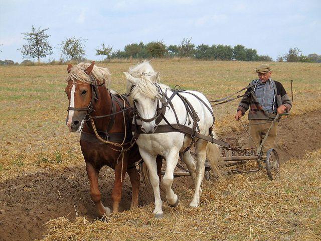 Termenul limită pentru declararea veniturilor din agricultură, prelungit cu o lună
