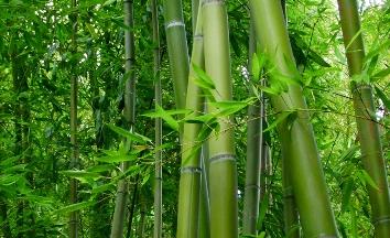 Bambusul multifuncţional