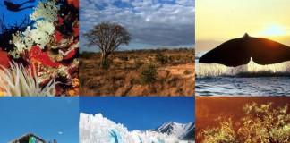 Ziua Biodiversităţii, sărbătorită pe 22 mai la nivel internaţional