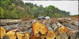 În regiunea Nord-Est s-a recoltat, în 2012, cel mai mare volum de masă lemnoasă
