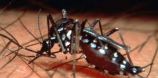 Avertisment: epidemie de febră dengue în Paraguay