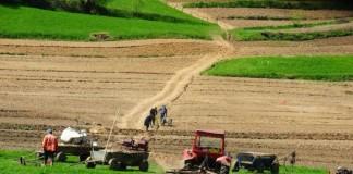 Termenul limită de declarare pentru cei care obțin venituri din agricultură, prelungit cu două zile