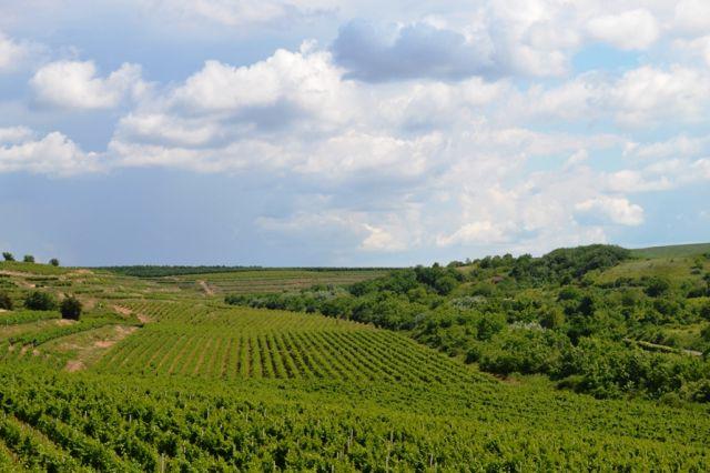 Domeniile Ostrov pregătește o investiție de 4 milioane de euro în turismul vini-viticol