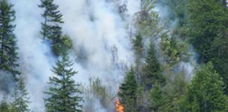 Maramureş: Incendiul de pădure din marginea cătunului Bloaja, nestins
