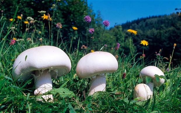 Intoxicația cu ciuperci