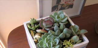 Cinci plante de apartament periculoase