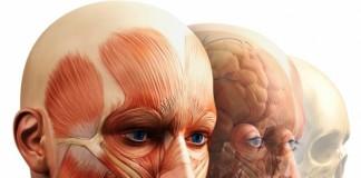 Curiozități despre corpul omenesc