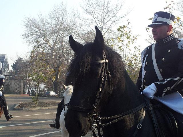 Ștefan Nuțu, fost agent la Poliția Locală București, are contract cu aceasta pentru servicii de pază călare