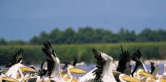 Raiul din Delta Dunării
