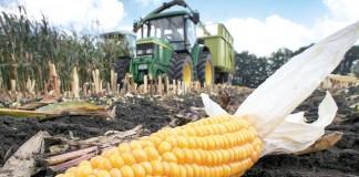 Peste 1.000 de tone de porumb infestat cu aflatoxină provenind din România, descoperit în Germania
