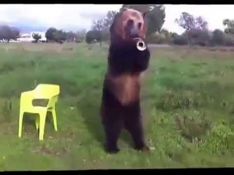 trained bear