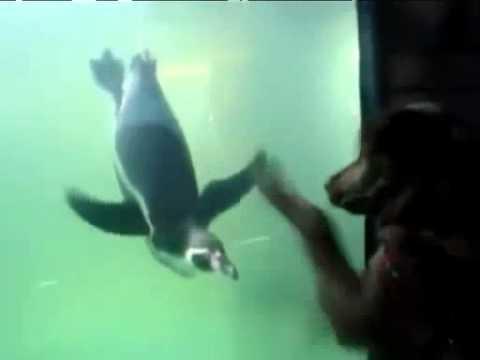 dog penguin