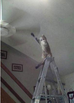 pisici ipostaze ciudate 11