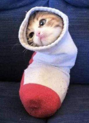 pisici ipostaze ciudate 3