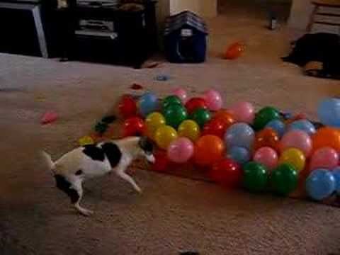 dog balloons