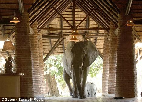 elefanti hotel 1