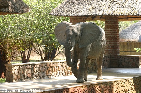 elefanti hotel 2