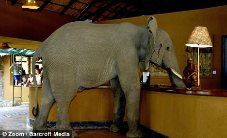 elefanti hotel 3
