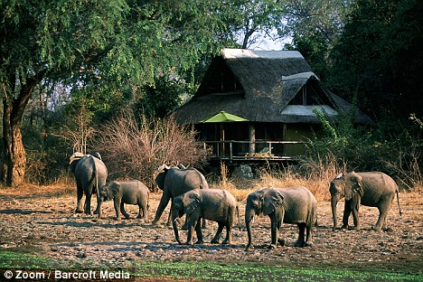 elefanti hotel 4