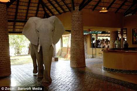 elefanti hotel