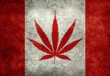 canada, legalizare, mariajuana, scopuri recreaționale