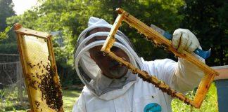 program național apicol, cereri finantare, apicultori, apia